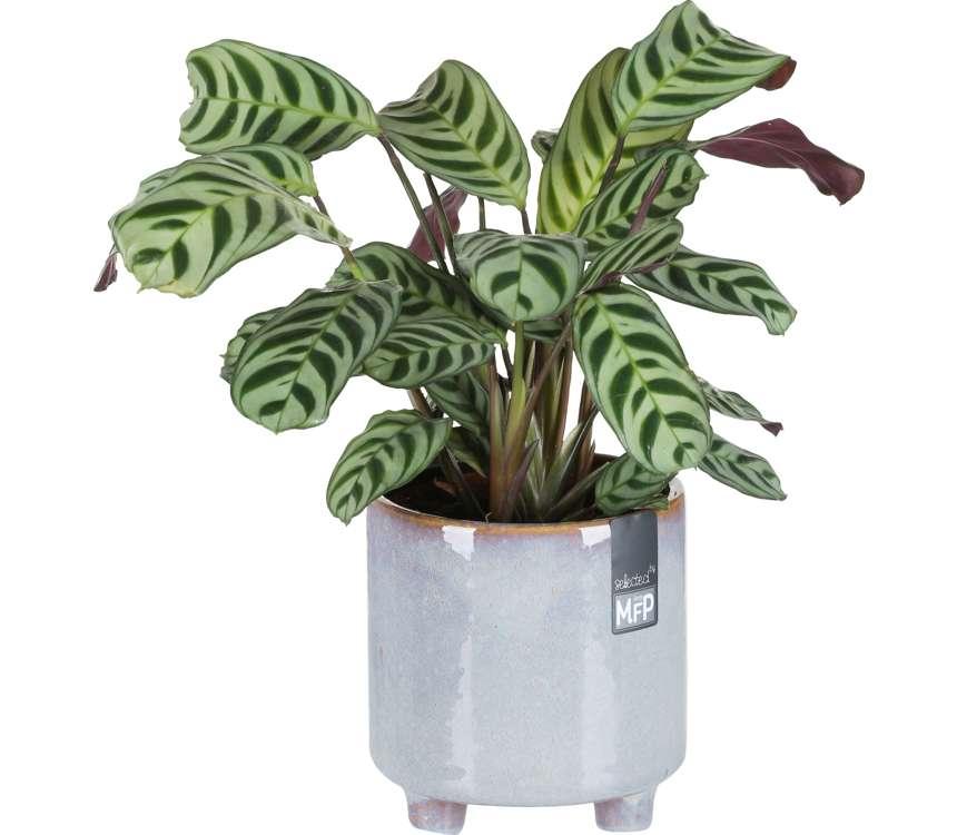Mix zelených rastlín v keramike