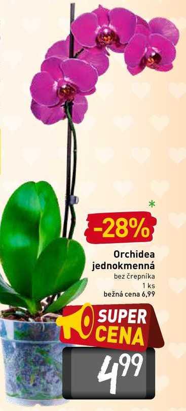 Orchidea jednokmenná