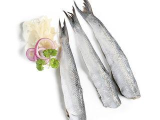 Korunné sardinky